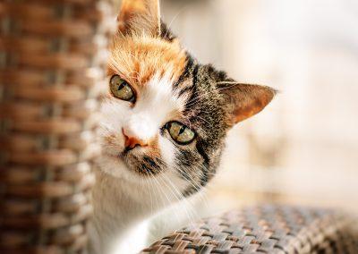 Katzenfotografie-Sensiebelfotografie40