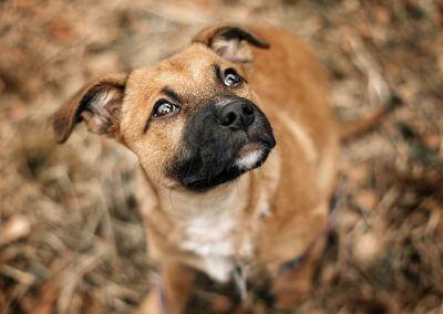 Hunde Sensiebelfotografie2